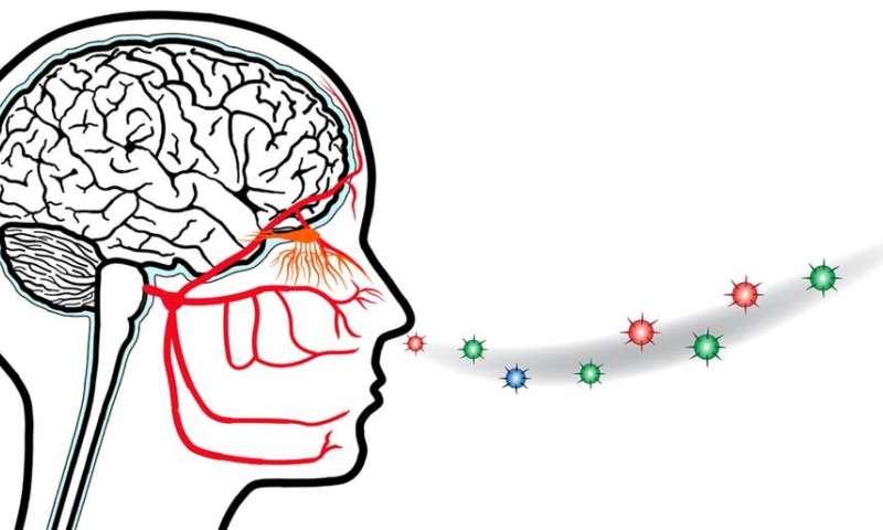 ثاثیر کرونا بر سیستم عصبی